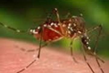 dezinfekcia5.jpg